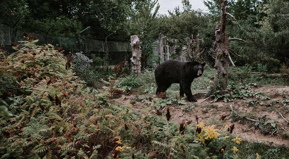 Moncton - Zoo